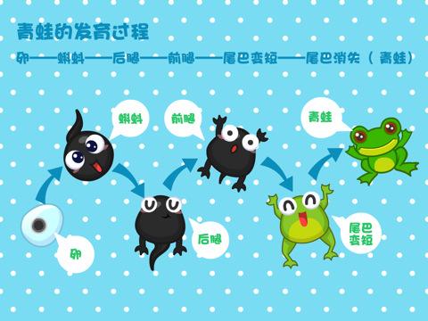 简笔画,小蝌蚪变青蛙的过程
