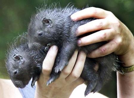 个个憨态可掬 十大最可爱的动物宝宝