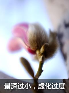 通向摄影高手之路 如何拍好各种花卉?
