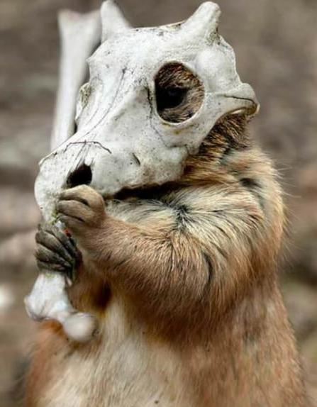 资讯 新闻 正文  宠物小精灵现实版之可拉可拉等 猫头夜鹰(弯弯的眼睛