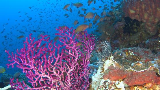 索尼酷拍科莫多 视频带你探秘海底世界