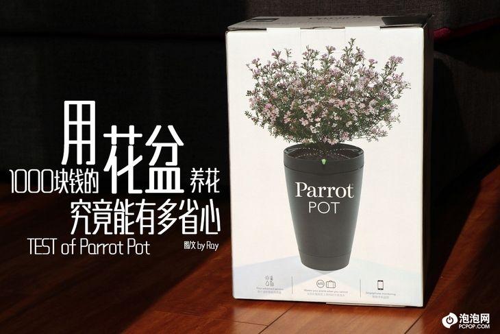 用1000块钱的花盆养花 到底是什么感觉