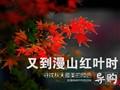 又到漫山红叶时 寻找秋天最美的颜色