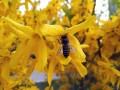 挑战摄影师:春风十里 努比亚Z17mini时光相机体验