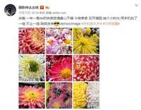 努比亚镜头下的深秋:济南的菊花别有韵味