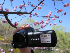 佳能LEGRIA HF R86 在桃花盛开的季节与你相见