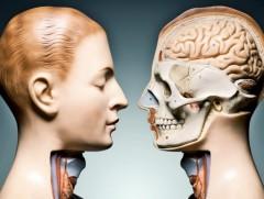 """想知道你的身体内部构造?那就来""""解剖""""一下吧"""