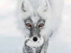 已有53年历史的野外生物摄影比赛 13张入围作品曝光