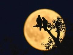 光吃月饼可还不够 教你中秋节怎样用相机拍好月亮