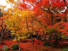 小白学摄影:教你在美丽的秋天怎样把红叶拍好看