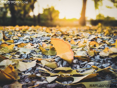 小白学摄影 巧用手机镜头拍出更好看的银杏秋叶