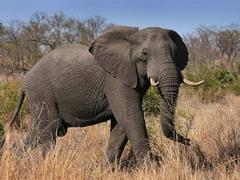 拍照需谨慎!游客走得太近拍照结果被大象踩死