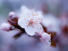 春花烂漫的季节怎样把花拍好看?你差的只是这样东西