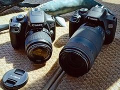 入门也粗犷 用EOS 1500D/3000D拍鲸鱼是啥体验