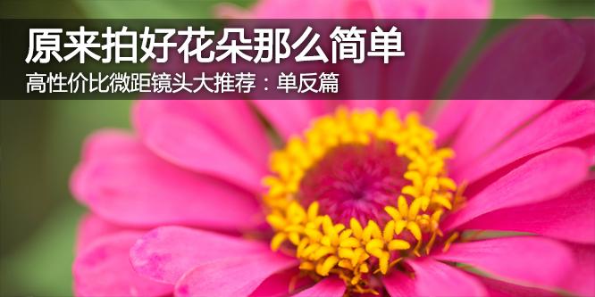 用微距镜头拍好花朵原来如此简单:单反篇