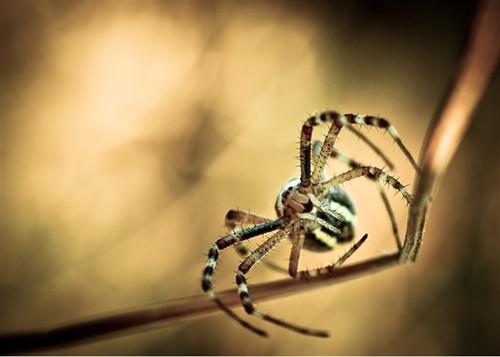 索尼世界摄影赛作品:自然与野生动物