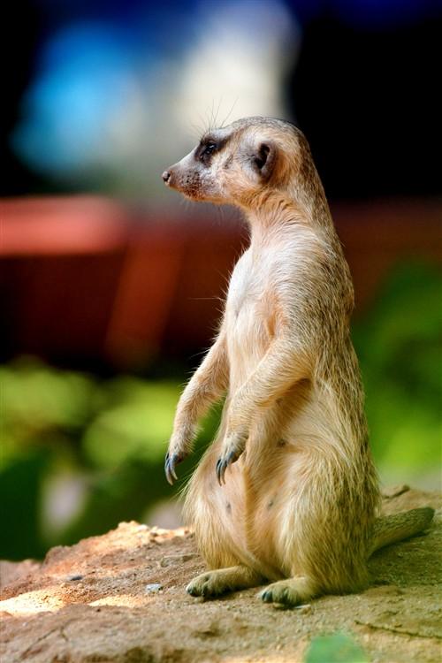 番禺香江野生动物园的可爱动物(三)    猴子是最人性化的动物,看看