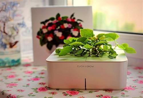 最好养的植物 Click and Grow智能盆栽