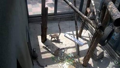 百度动物园百万人围观:遇暴雨纷纷藏匿