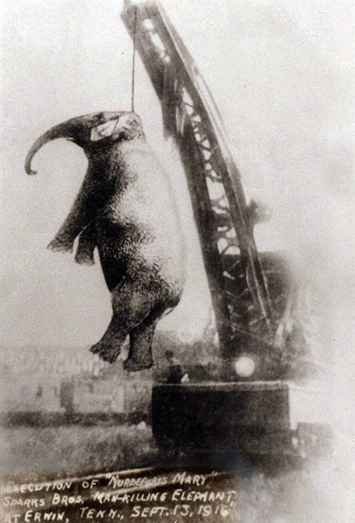 历史照片 1916年被起