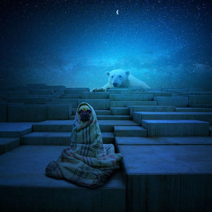 超现实主义摄影作品欣赏:动物占领地球