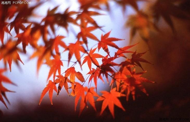 金秋十月 拍摄秋天美景的地点与技巧推荐