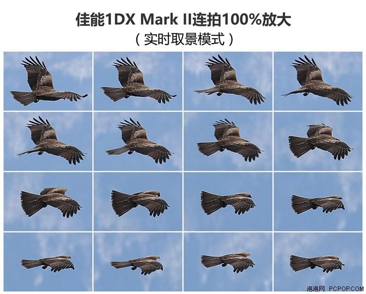 对焦比预想更出色 佳能1DX Mark II试拍
