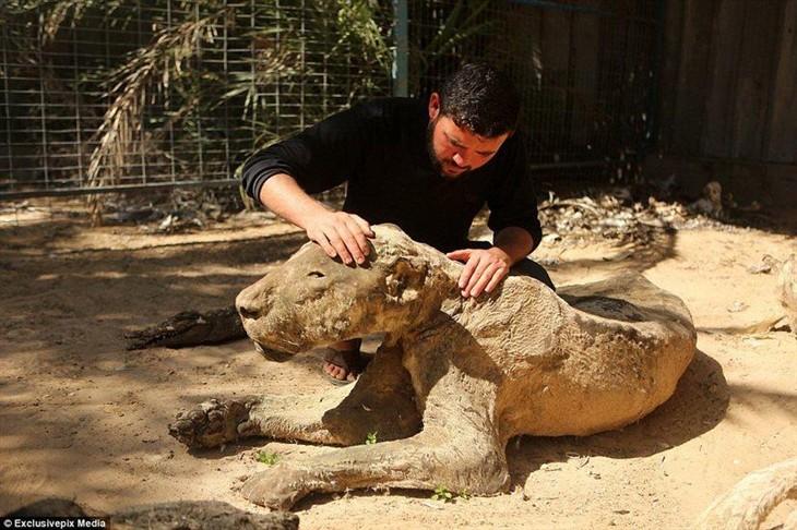 战争的后果 拍摄世界上最恐怖的动物园