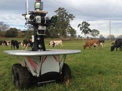 牧羊犬要失业?澳大利亚研发放牧机器人