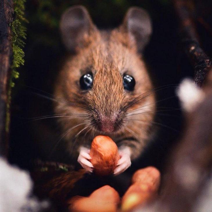 森林小动物的密友 摄影师拍摄超萌松鼠