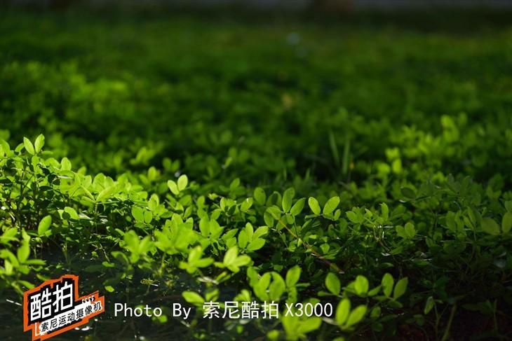 茶城刺激生活 酷拍X3000记录普洱山速降