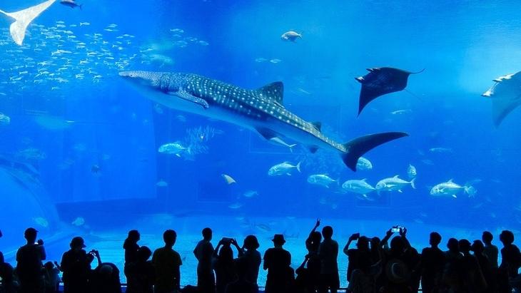 索尼4K攝像機AX40拍攝 索尼4K攝像機AX40的自動模式完全不用擔心白平衡和光線變化,在館中也能輕松拍攝,蛋撻第一次看到如此多海洋生物的場景。海豚劇場一直備受歡迎,我們是提前20分鐘左右到了劇場也只能坐在靠后的中間位置,索尼AX40的20倍變焦功能也是相當給力,海豚高高躍出水面、在水池中嬉戲的每個細節都完美捕捉了下來。