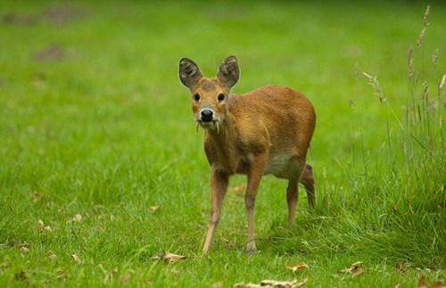 奇葩动物照片走红:羚羊长脖子大耳朵好神奇!10