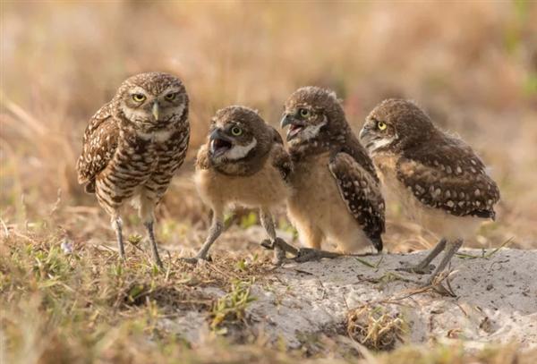 2017年搞笑野生动物摄影大赛入围作品赏