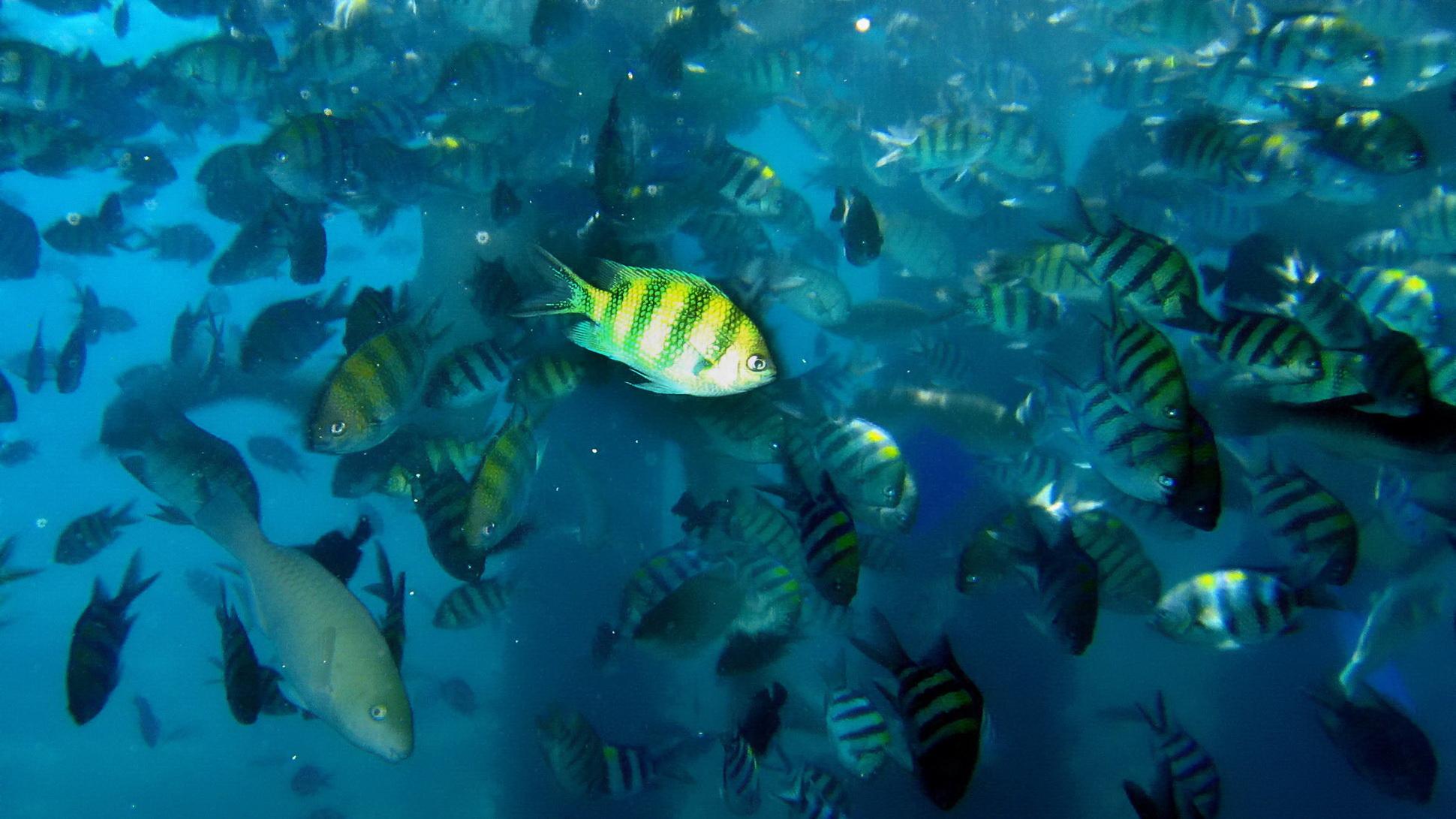 壁纸 海底 海底世界 海洋馆 水族馆 桌面 1940_1091