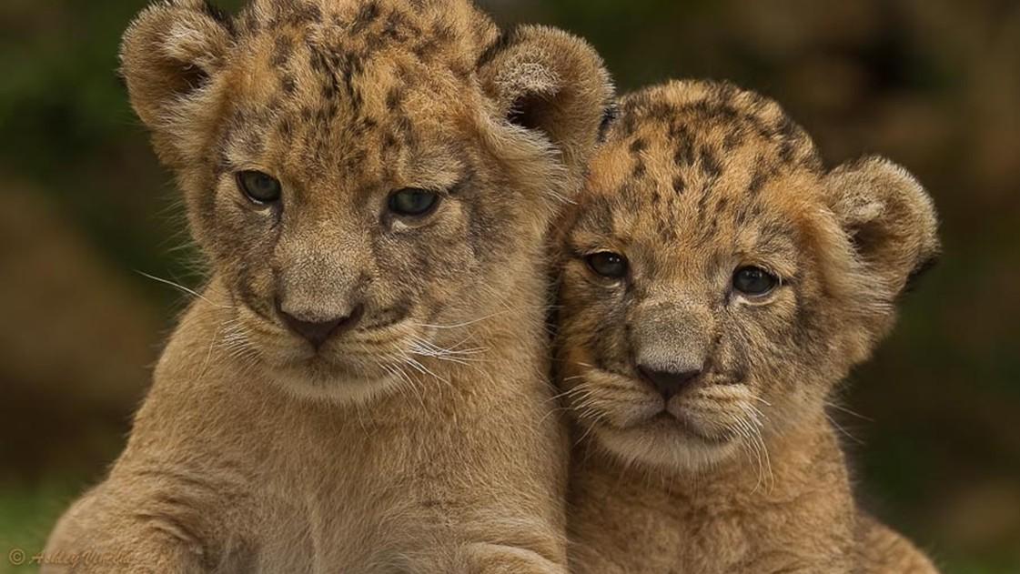 动物世界:猛兽罕见的微笑时刻