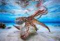 UPY年度水底摄影比赛 2017得奖作品精选