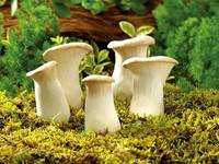蘑菇充电器:萌化车内空气