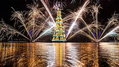 看遍全球最美的圣诞树!