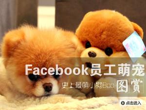 Facebook员工萌宠:史上最萌宠物Boo