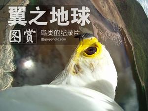 """翼之地球!从""""鸟类""""视角拍摄的纪录片"""