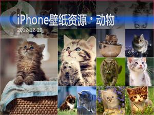 天然呆萌小猫来袭 iPhone动物壁纸集