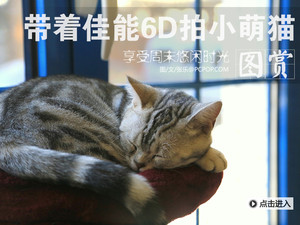享受周末悠闲时光 带着佳能6D拍小萌猫