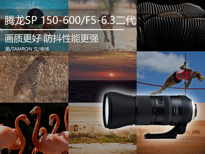 防抖更强 腾龙SP 150-600mm二代镜头样片