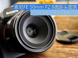 见微知著 索尼FE 50mm F2.8微距头图赏