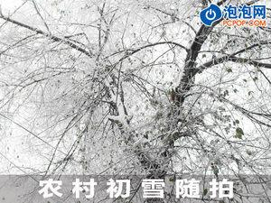 看看最原始的自然 农村初雪后的清晨