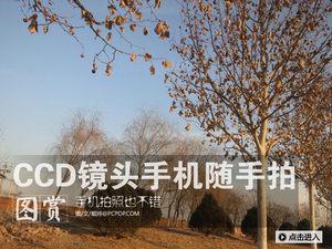 CCD镜头手机随手拍 成像锐利色彩不错
