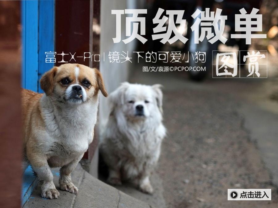 顶级微单富士X-Pro1镜头下的可爱小狗