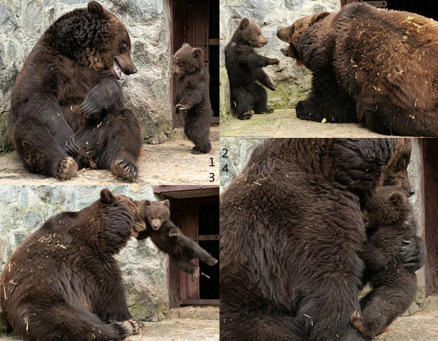 拍摄野生动物照片 记录熊的生活状态