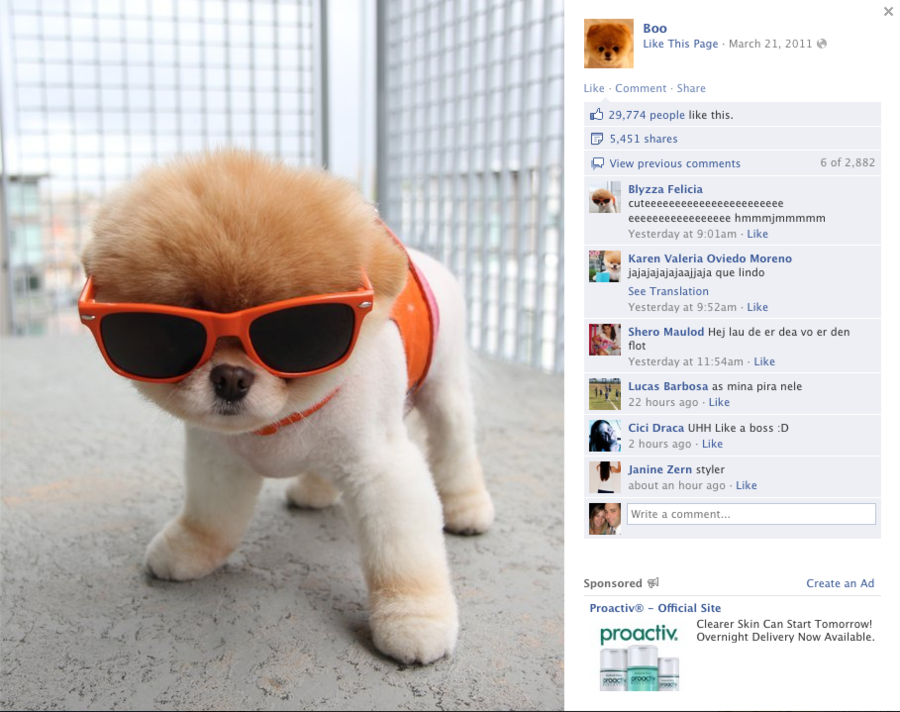 在谷歌上查找世界上最可爱的宠物你就可以找到它的